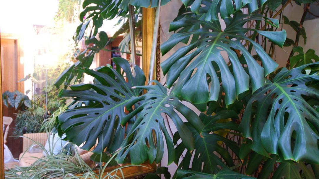 Balmernie plant